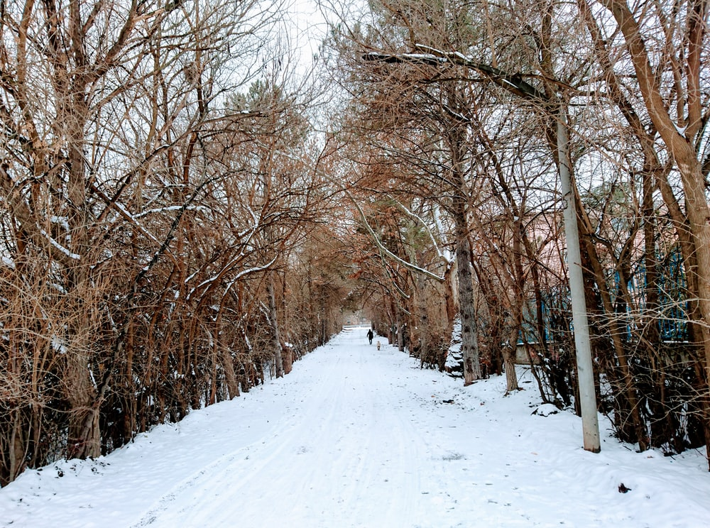 pathway covered in snow