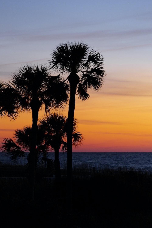 silhouette photo of coconut tree near beach shores