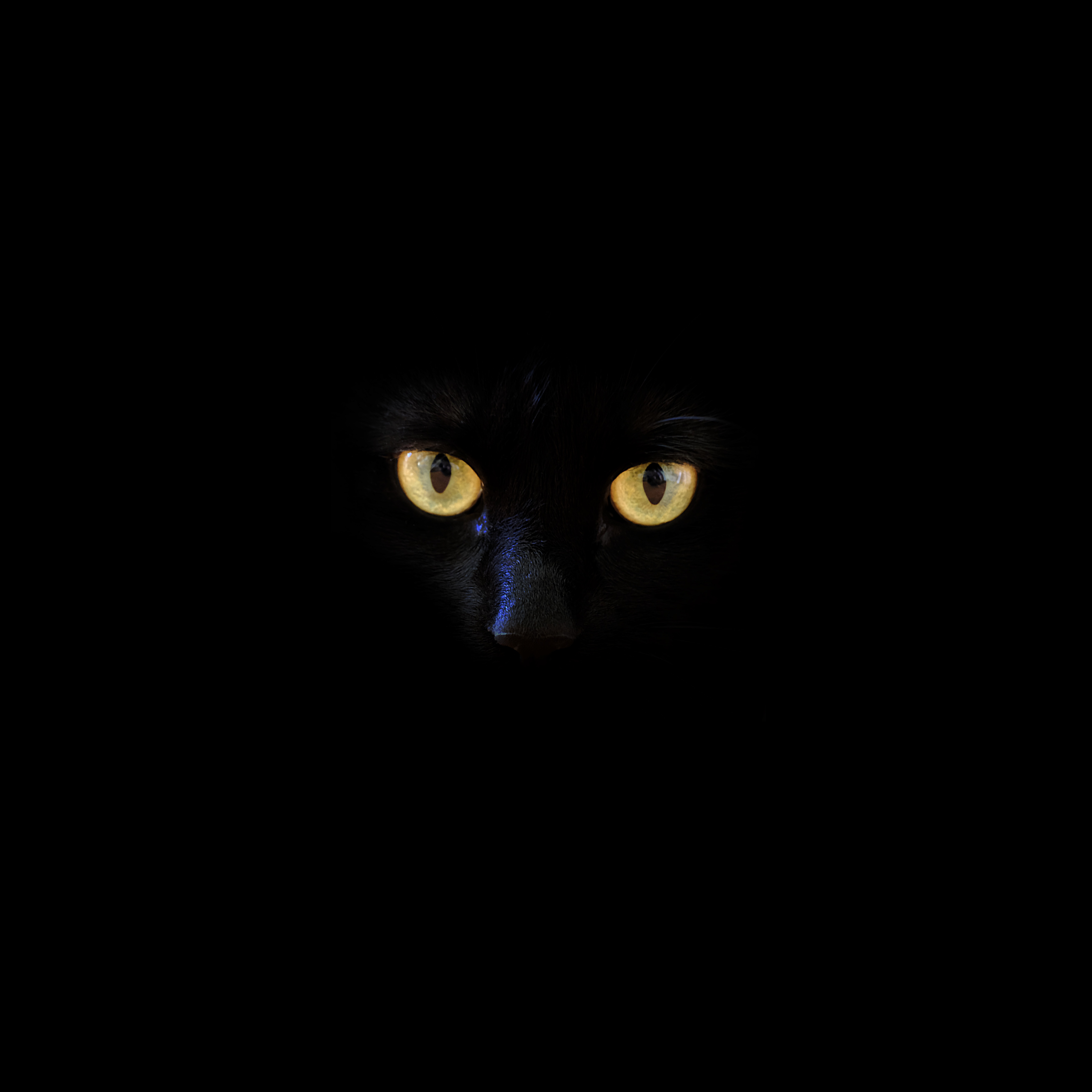A Black Cat poetry stories