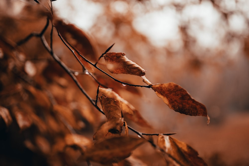 shallow focus photography of brown-leafed plants