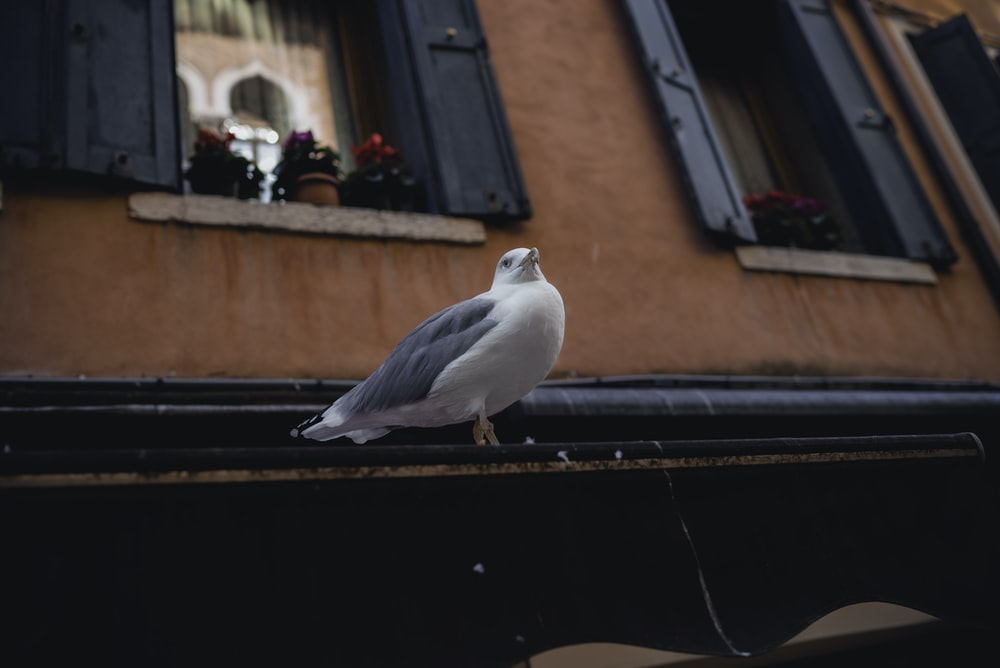 white and gray bird pearching near black wooden door window