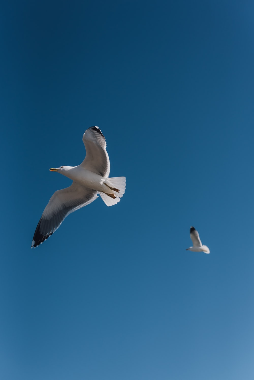 two white seagull flying in air during daytim