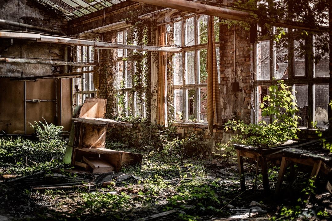 Overgrown room with windows