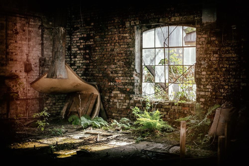 abandon house and green-leafed plants