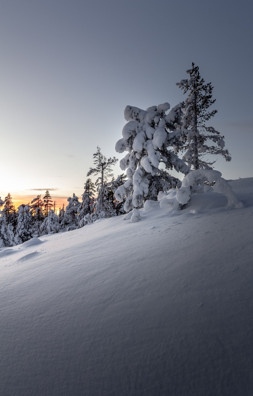 snow covered trees during golden hour