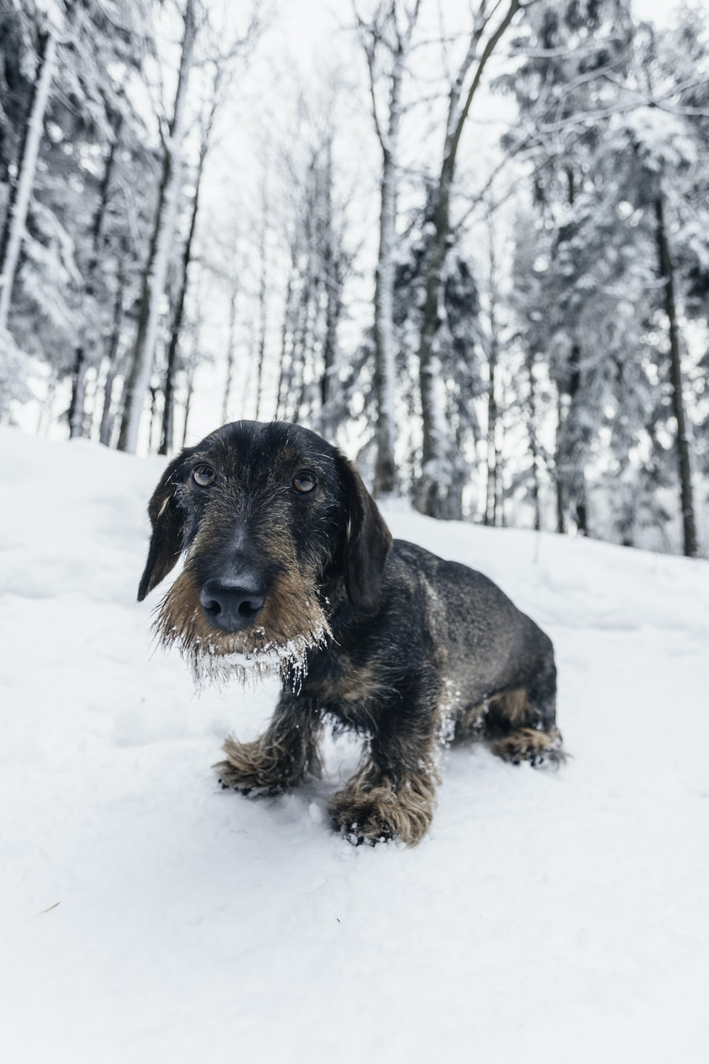 short-coated black dog on snow