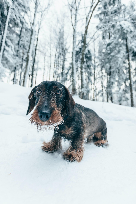L'ipotermia nel cane