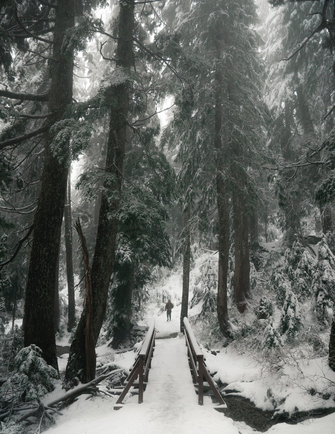 If you ever go to Mount Seymour, you might be able to do this easy trail going to Dog Mountain. But on your way back, if you feel like you still have lots of energy to spend, then I recommend you take the rough path on the way to Suicide Bluff. You won't be disappointed, but be careful not to miss the path. The ropes to help you go up there are hidden under the snow… One hell of a hike.
