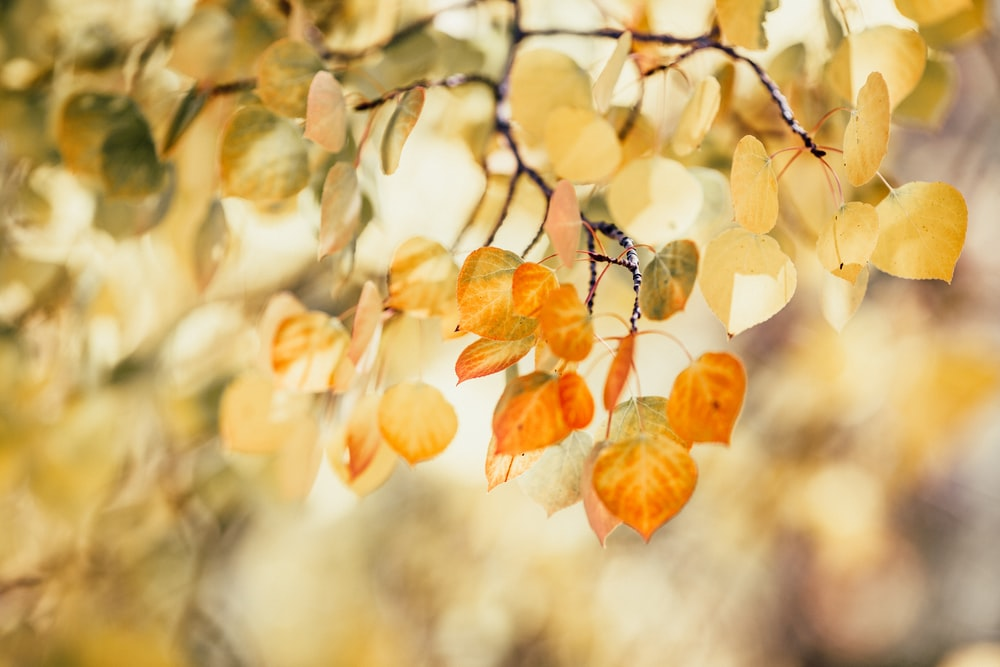 orange and yellow dried leaves on tree