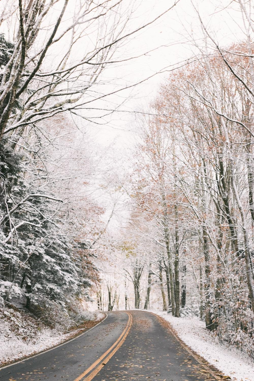 asphalt road at middle of leafless trees