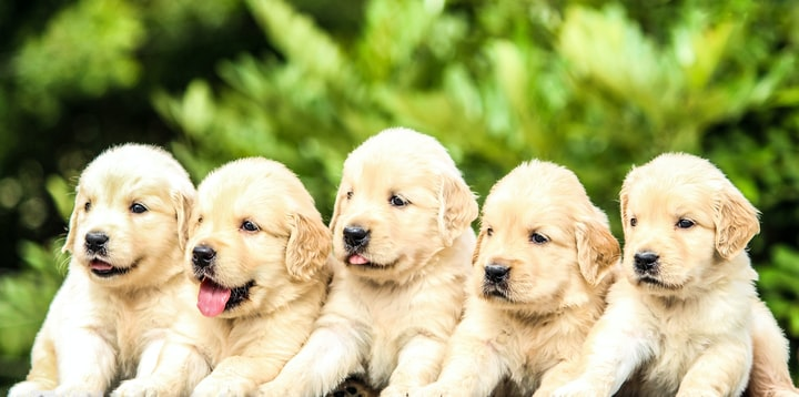 Top 5 Family Dog Breeds.