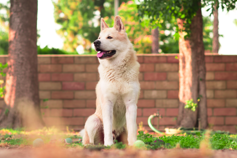 white dog sitting on grass