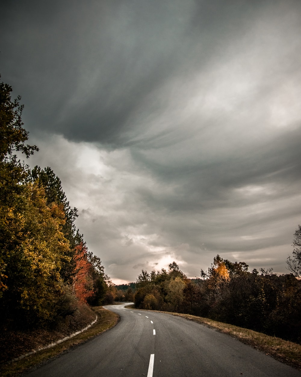 road beside green-leafed trees under gray clouds