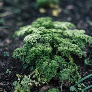 close-up photo of green leaf plants