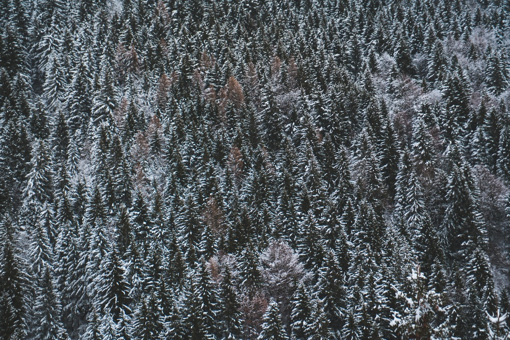 aerial photo of snow covered forest