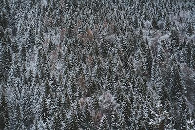 Panorama ritratto dopo la prima nevicata internale sulle strade del Maniva
