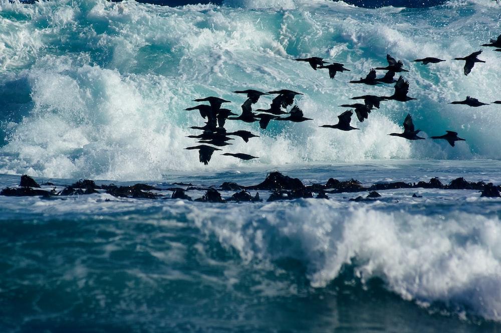 flock of birds above water