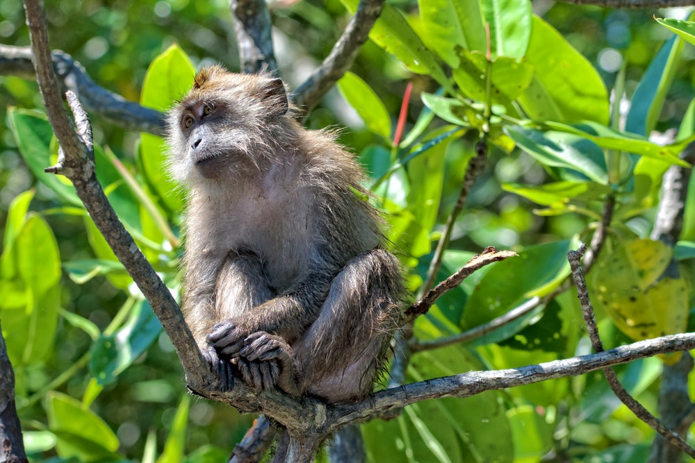 monkey on tree trunk