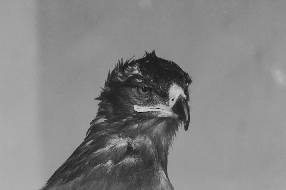 gray bird illustration