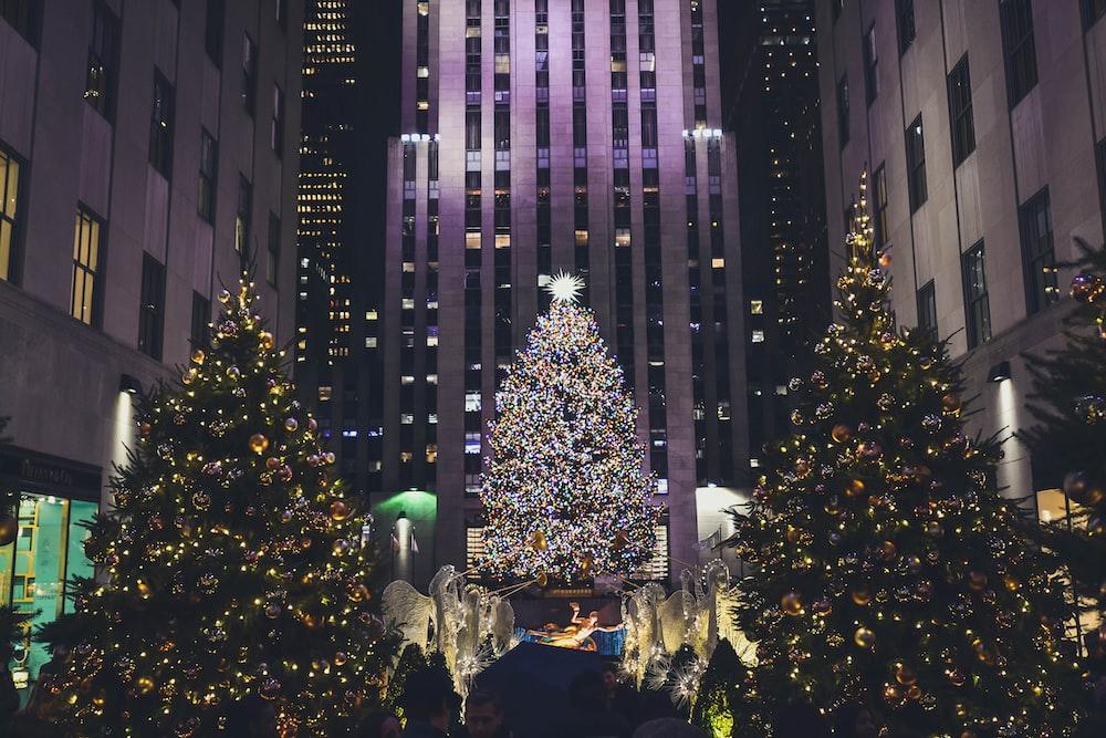 lighted Christmas trees