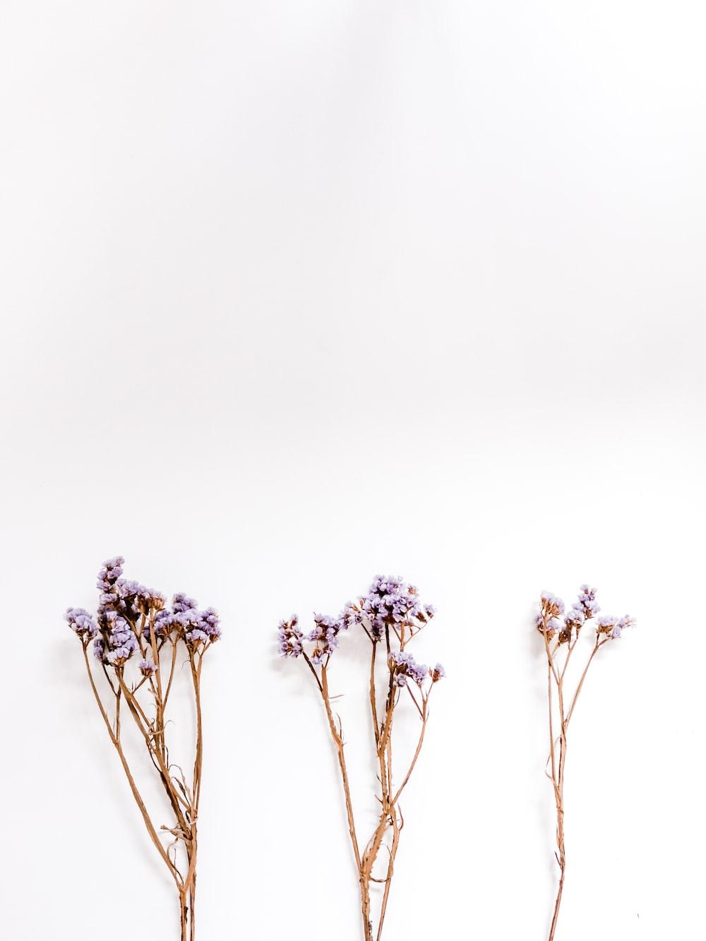 three purple-petaled flowers on white surface