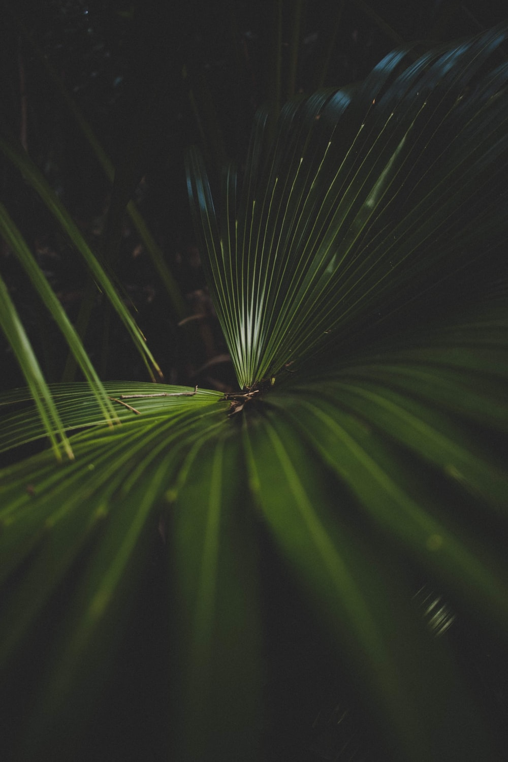 close-up photography of green palm plant