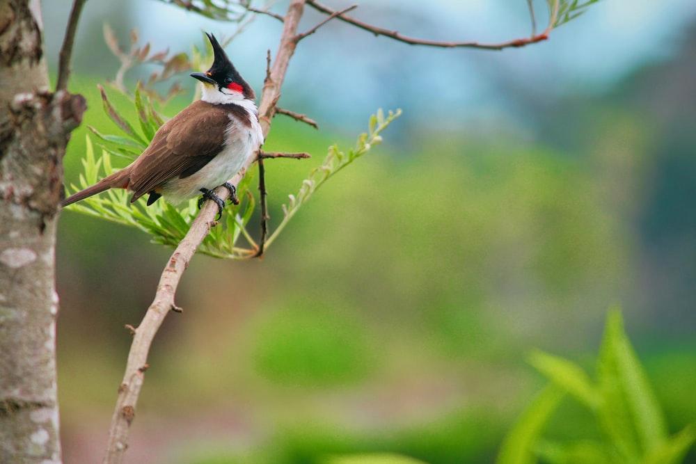 black, white, and brown bird birching on tree branch