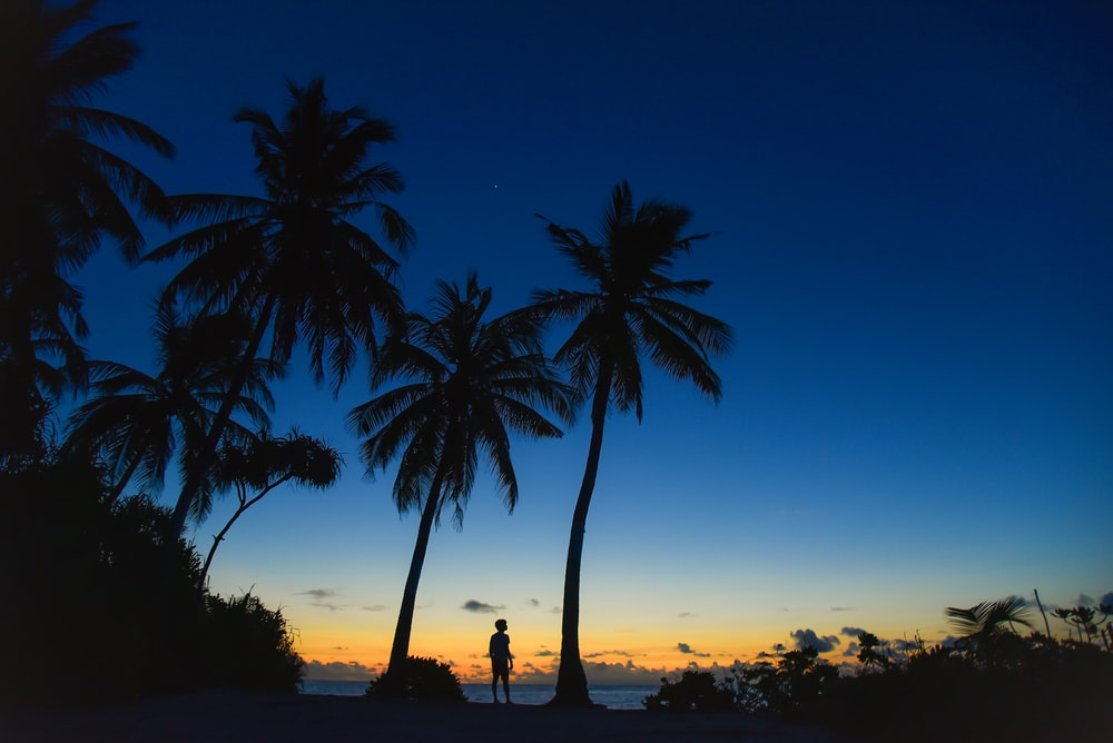 person standing near palm trees in silhouette photography