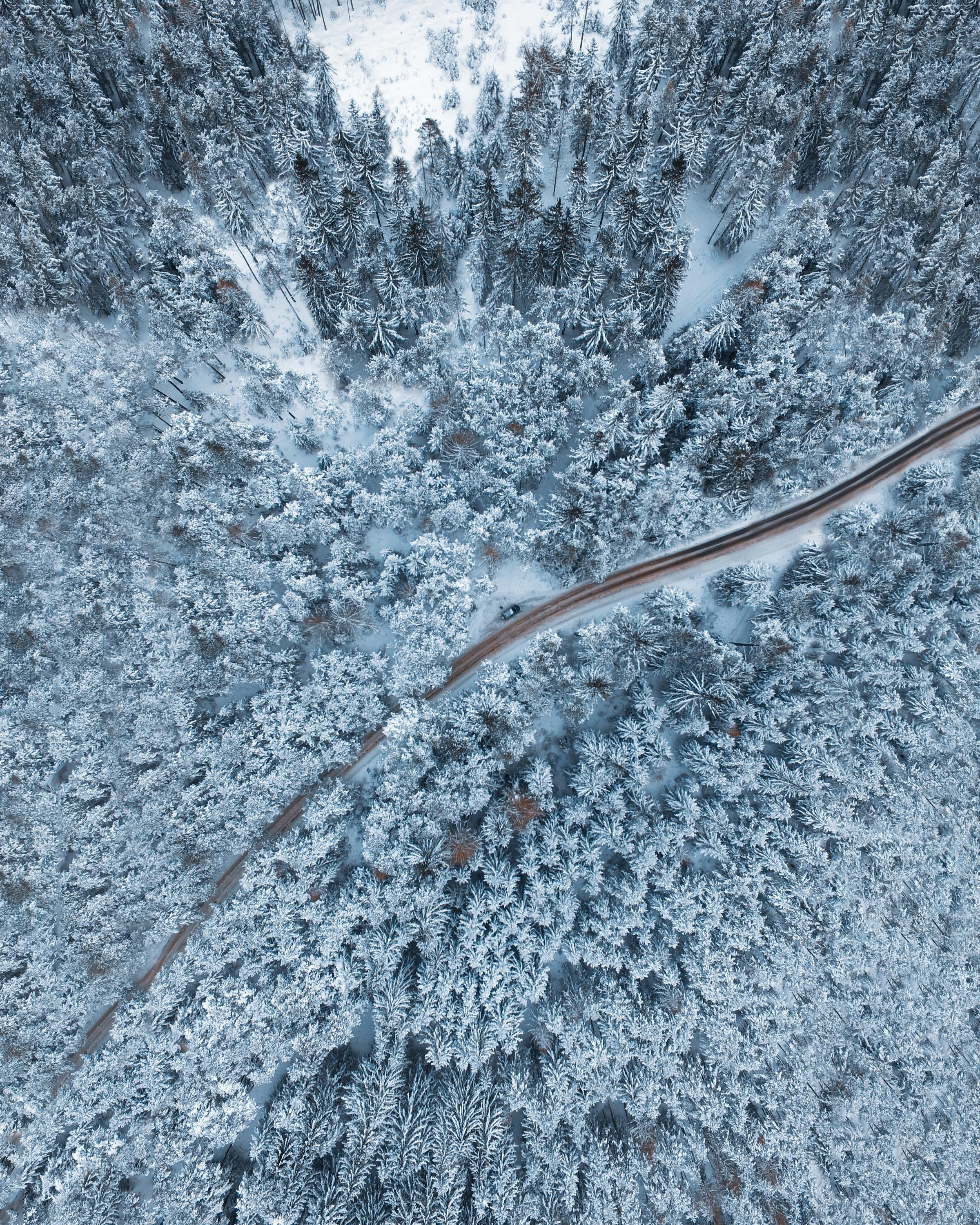 bird's-eye view photo of empty way surrounded by pine trees