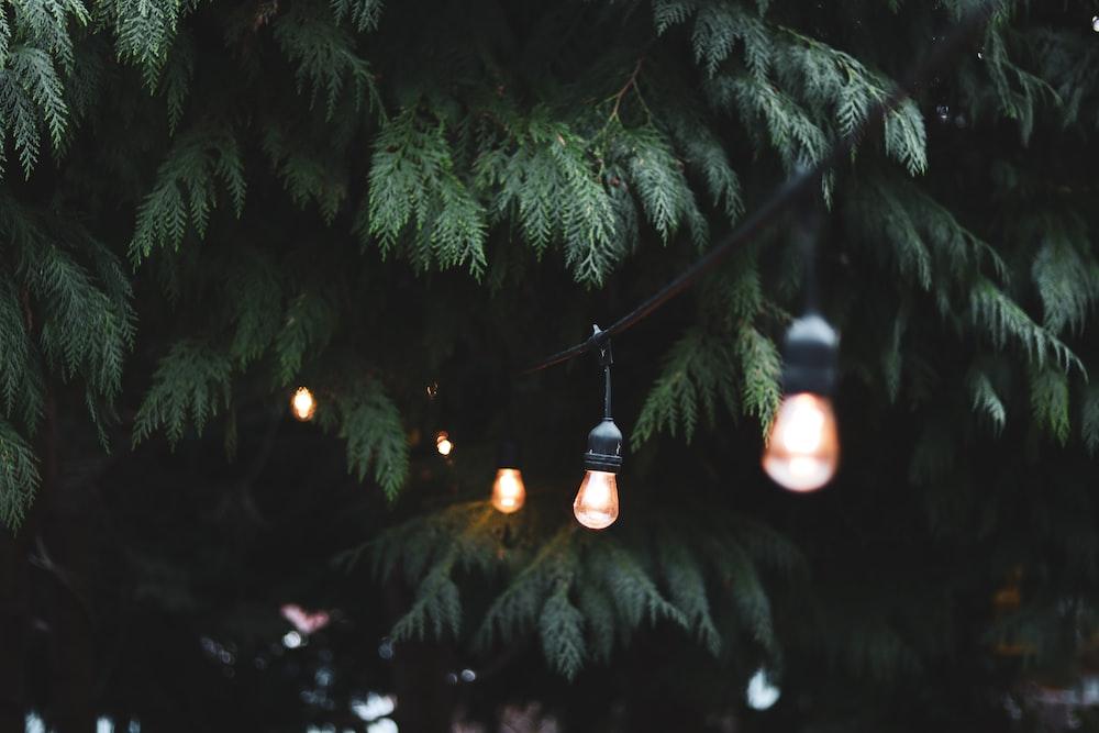 powered-on light bulbs near tree