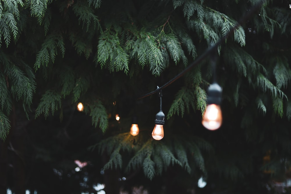 powered-on light bulbs near tree