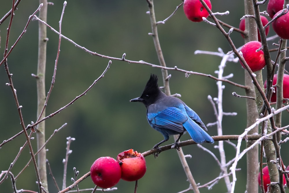 blue and black bird perching on branch