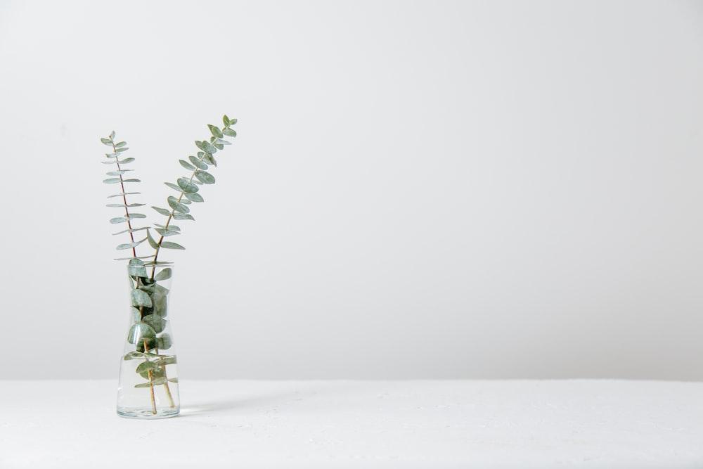 green fern plant inside clear glass vase