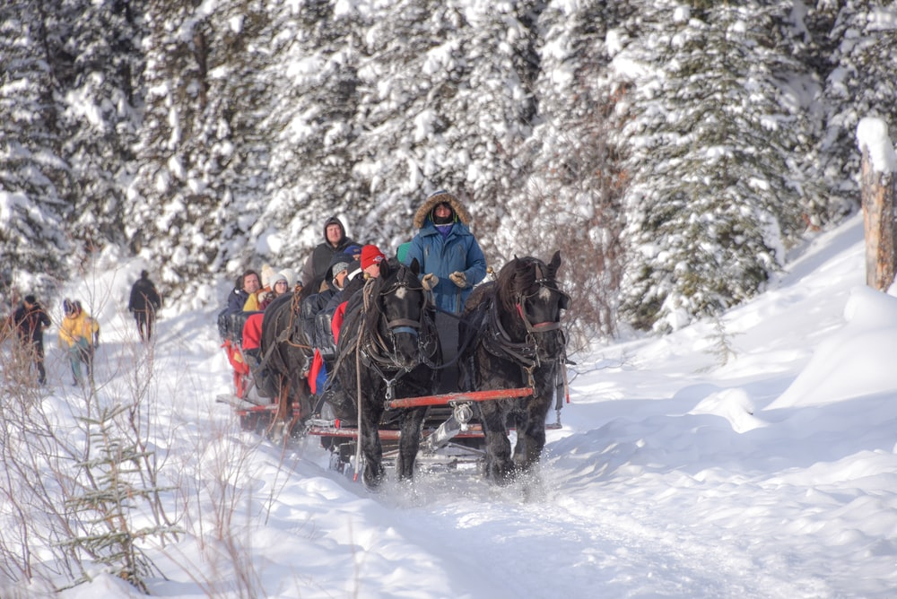 time-lapse photography of people riding horse carriage along snow-covered mountain