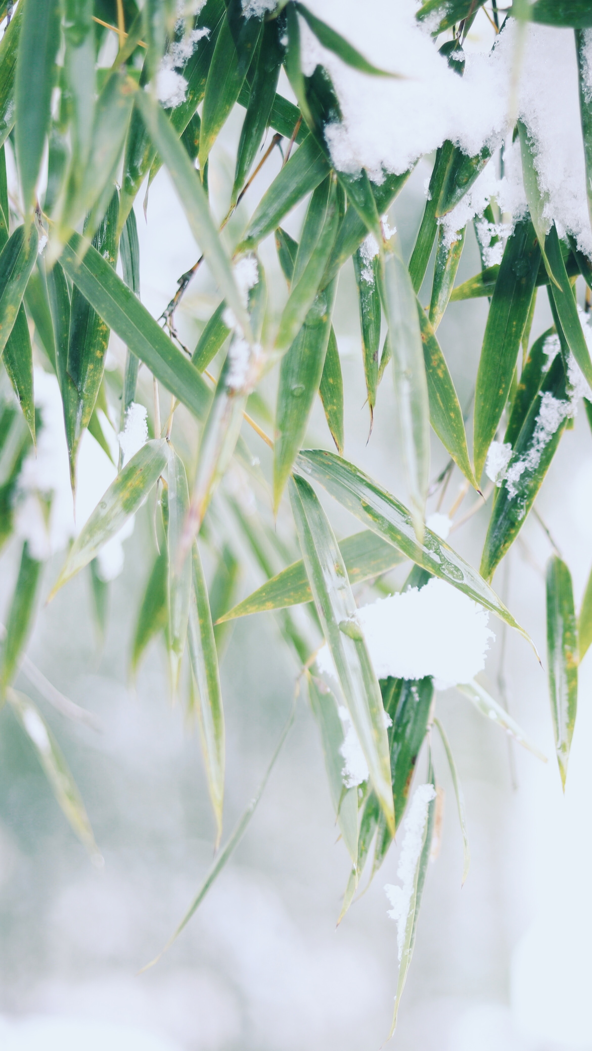 green leafed plant covered with snow