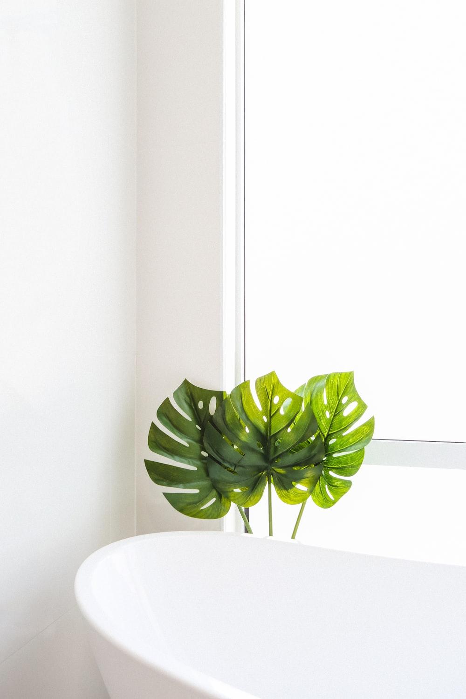 green-leafed plant beside bathtub