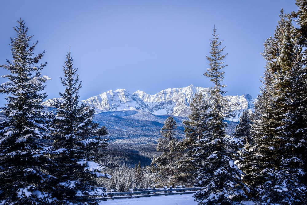 snow covered pine trees and mountain during daytime