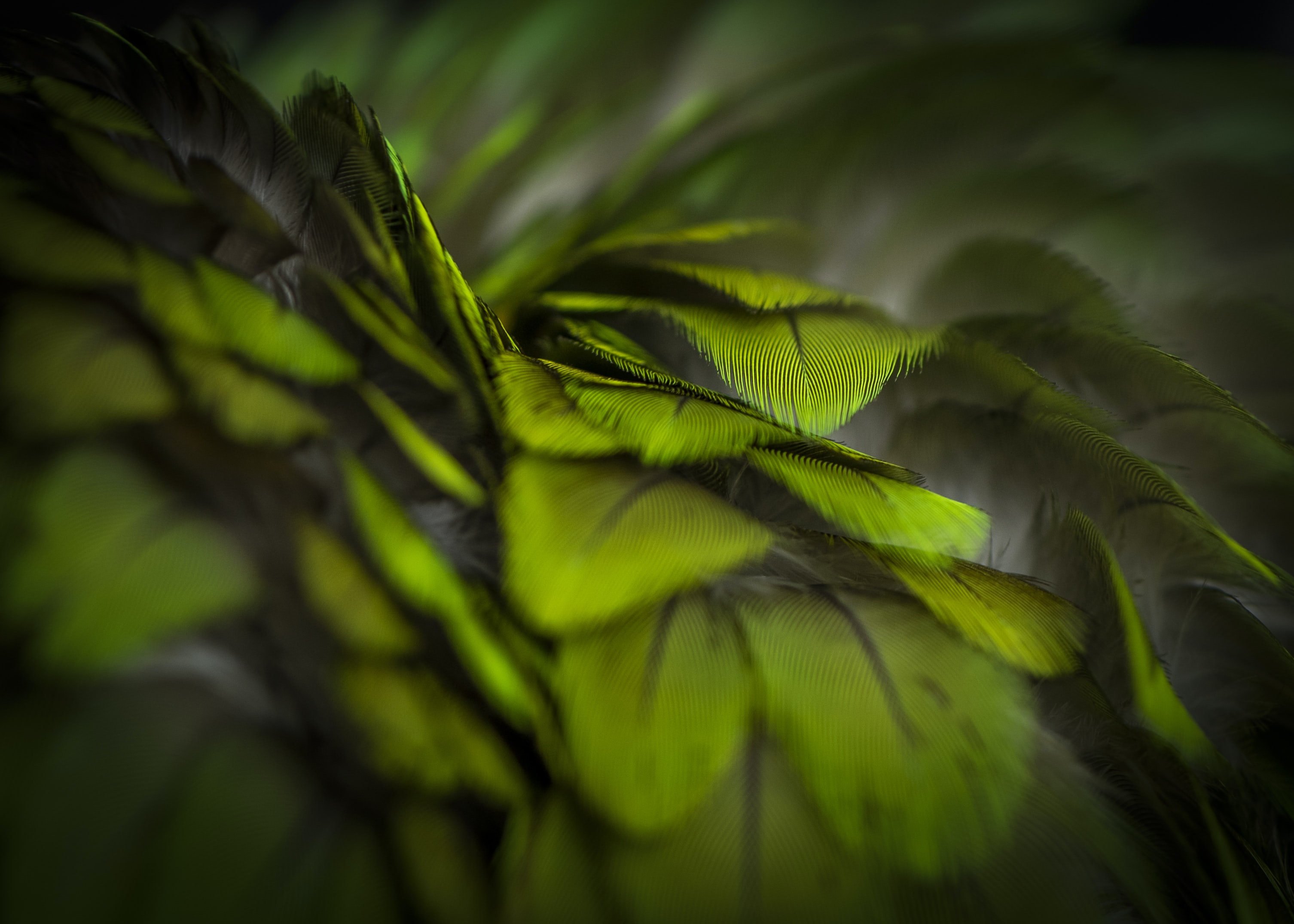 green and black floral textile