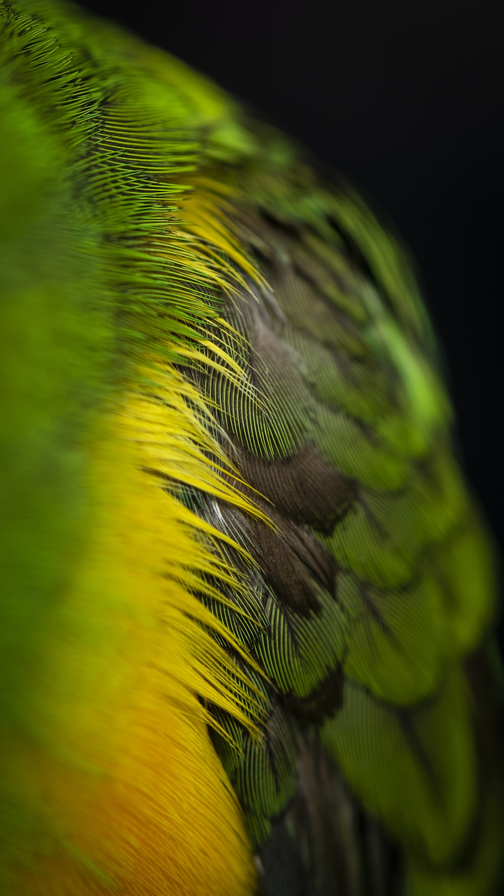 green and black feathers