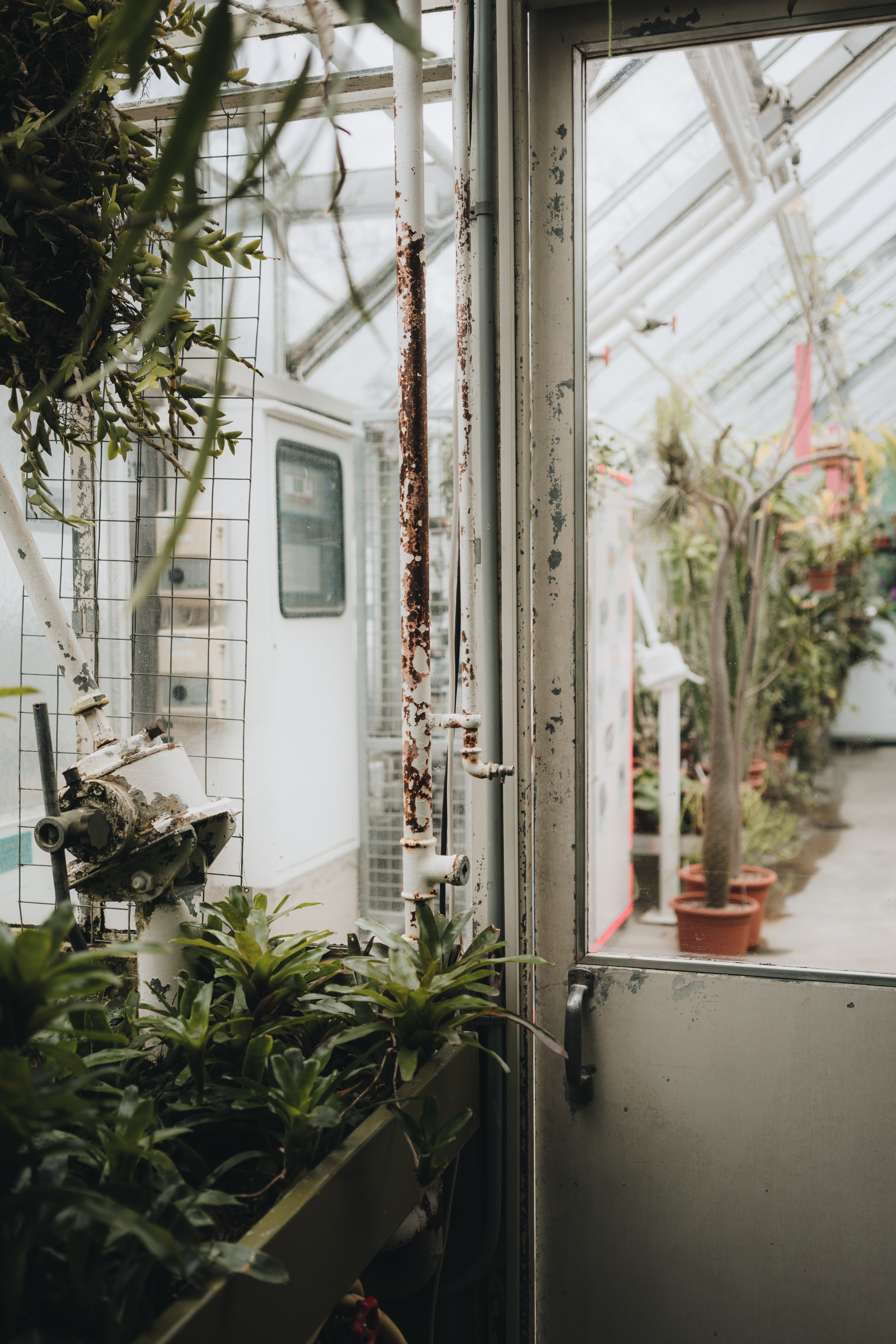 closed white metal greenhouse garden