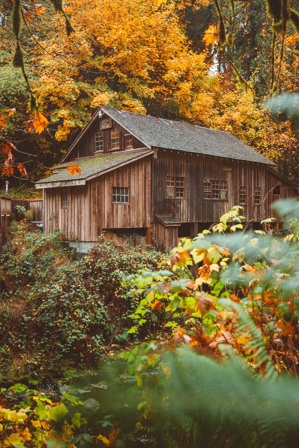brown wooden house surrounded by orange trees