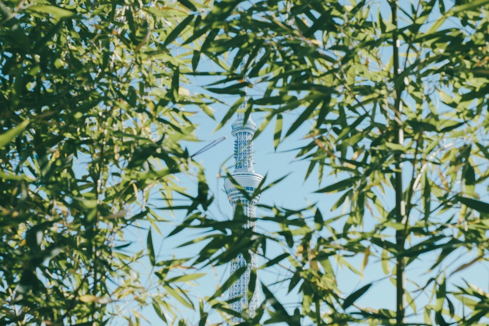green-leaf tree in front of white tower during daytime