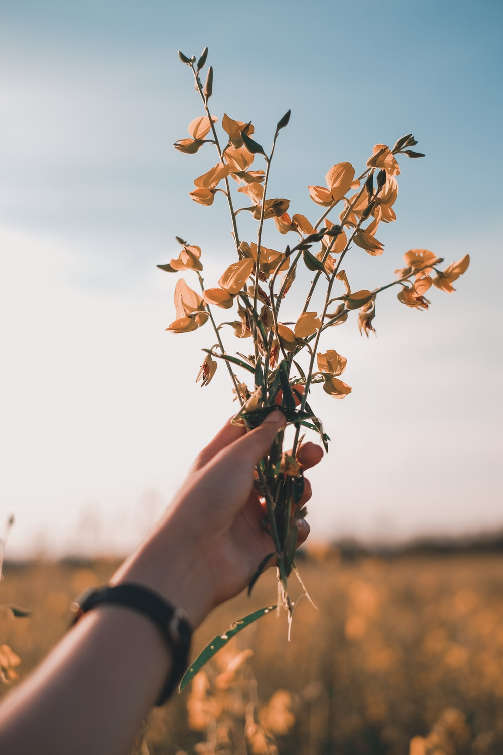 person holding yellow flowers