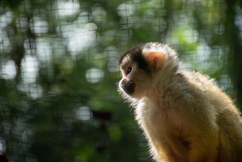 close-up photography of white monkey