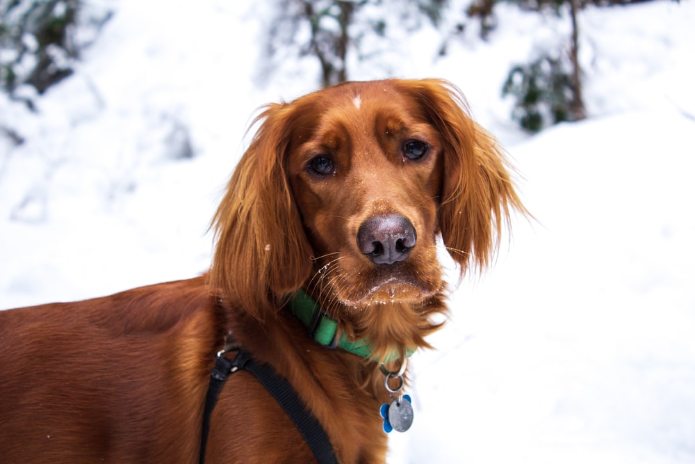 brown dog on snow