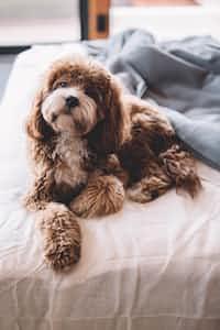 A pet dog is a better listener than God.   dog stories