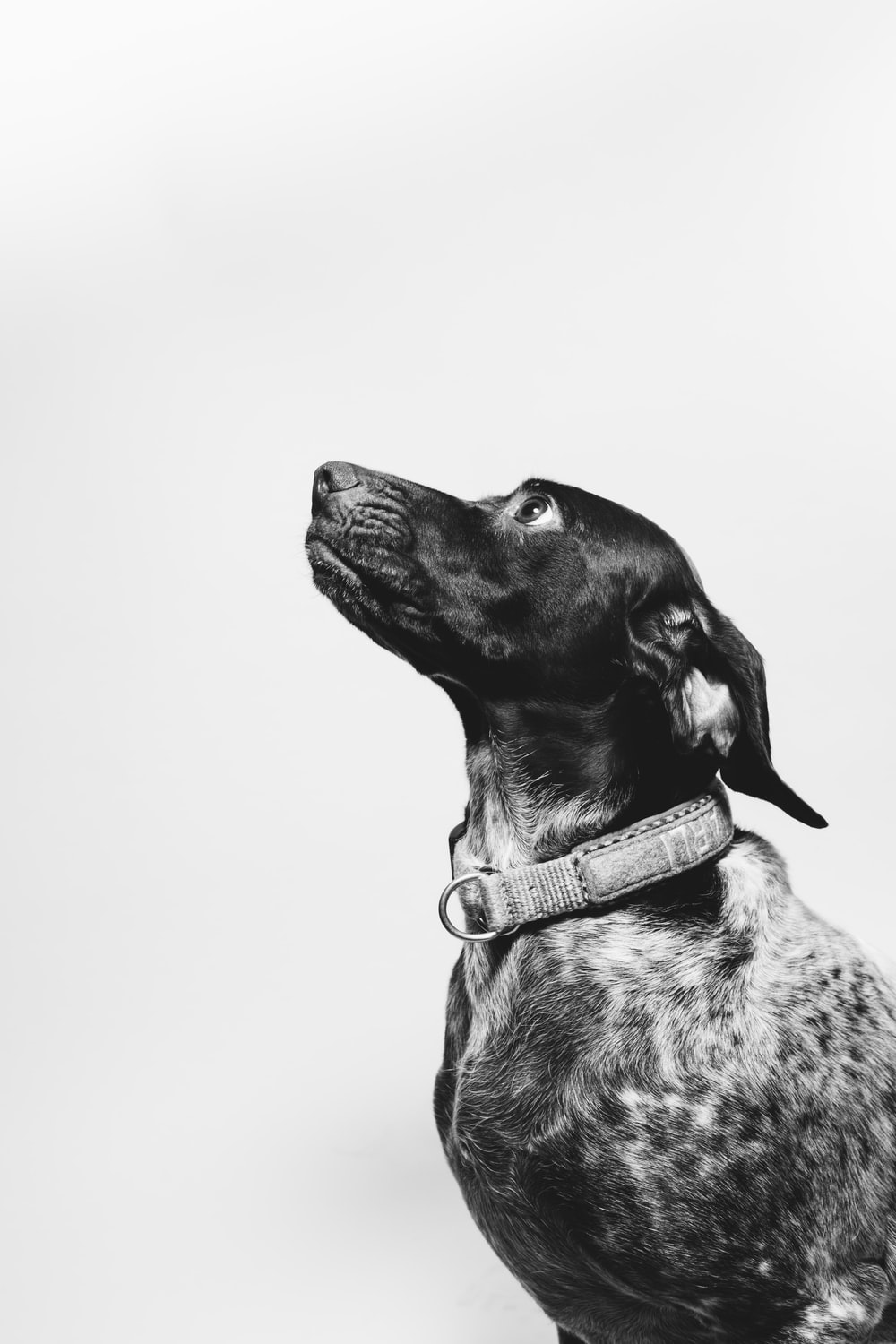 dog in grayscale photo