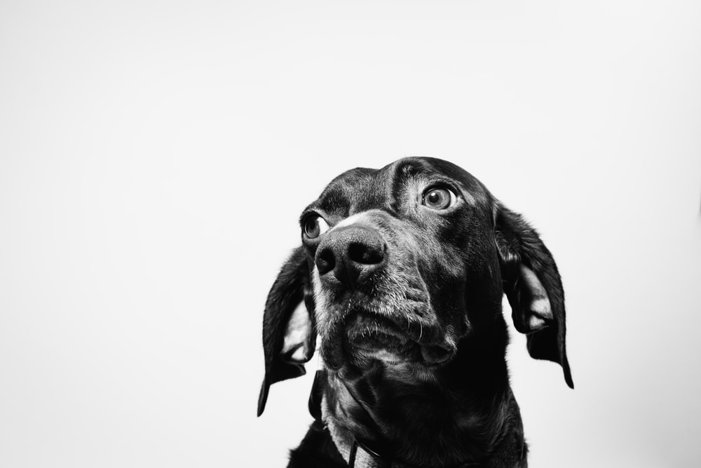 black dog in close-up photography