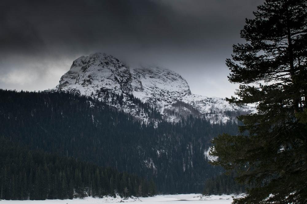 pine trees near snow mountain
