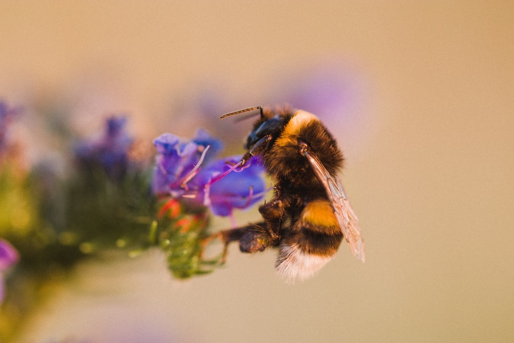 bee on flower close-up photography